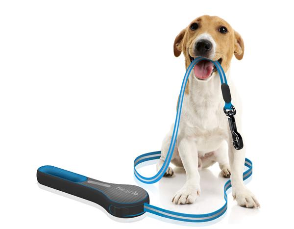 Контроль за поведением собаки с помощью поводка.