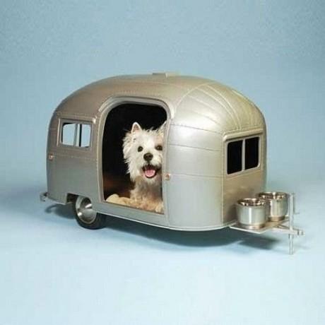 Дом для гастролирующих псов