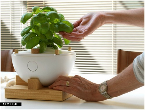 Умный концептуальный горшок Eve Lamp для домашних растений