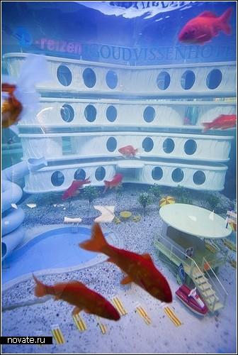 Гостиница для рыбок. Первая и единственная