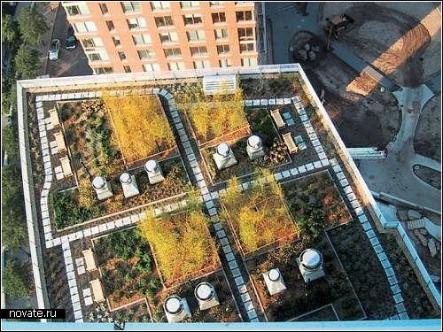 Обзор *зеленых домов* с газонами на крыше