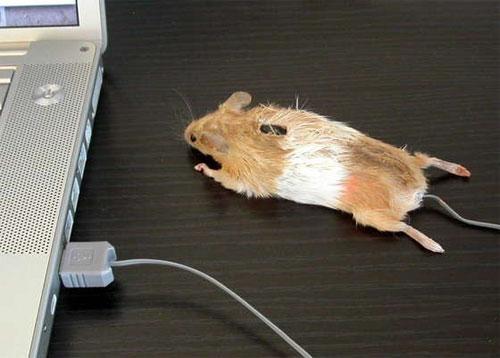 Реинкарнация мертвого мышонка