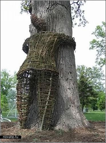 Хочешь обнять дерево? Становись в очередь!