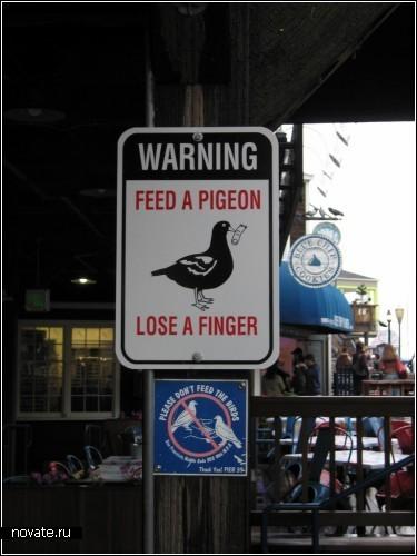 Не кормите голубей! Иначе рискуете остаться без пальцев