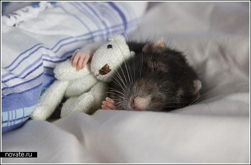 [Изображение: cutest_rats2.jpg]