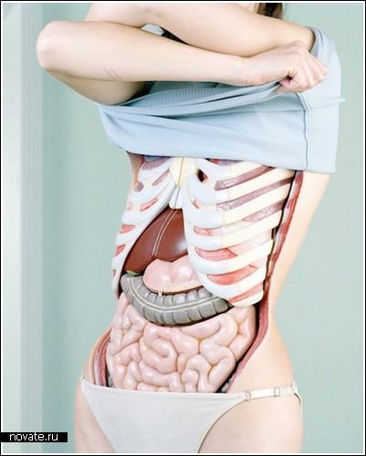 Анатомия в фотографиях от Koen Hauser