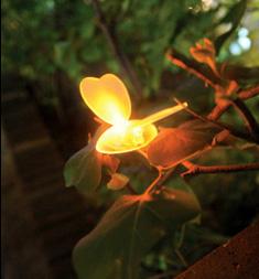 Светящиеся бабочки от Mi-Sook Lee