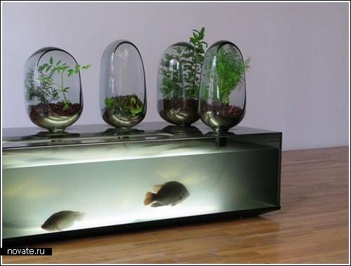 балансирующий аквариум.