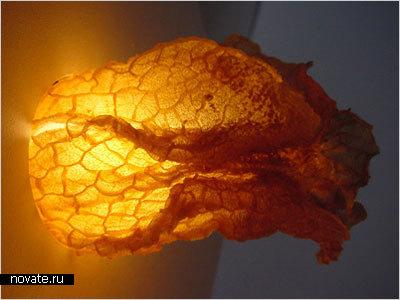 Лампы из желудков овец