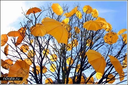 Везде зонты!
