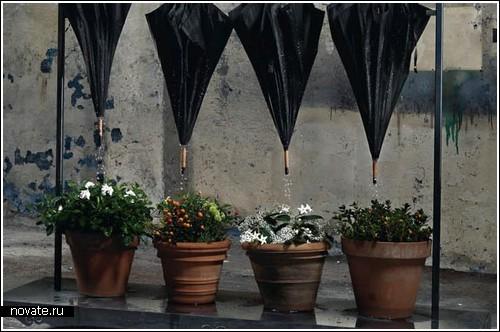 Поливаем цветы водой с зонтов