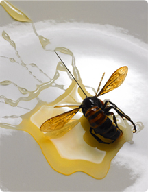 Закуски из насекомых