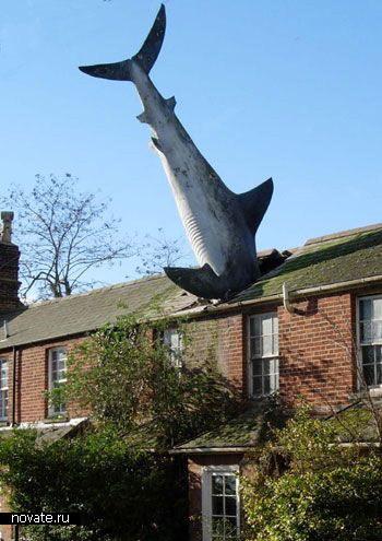 Гигантская акула в крыше дома в Оксфорде