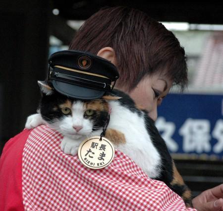 Кот в Японии
