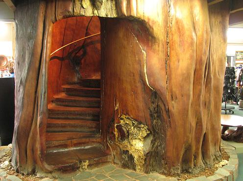 Лестница в вечном бревне