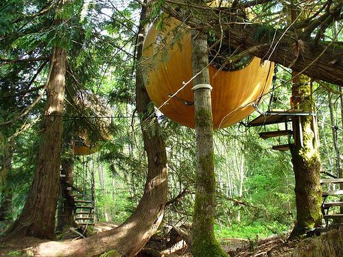 [عکس: treehouse1.jpg]