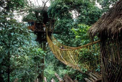 [عکس: treehouse5.jpg]