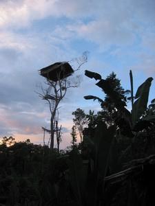 [عکس: treehouse6a.jpg]