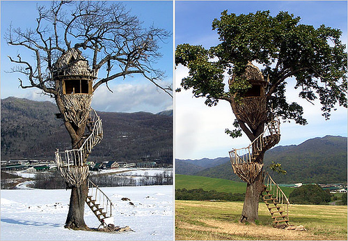 [عکس: treehouse7.jpg]
