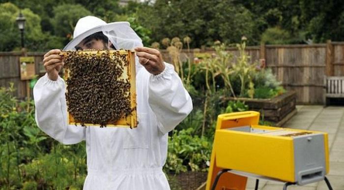 В Башкирии есть школы, где изучают пчеловодство