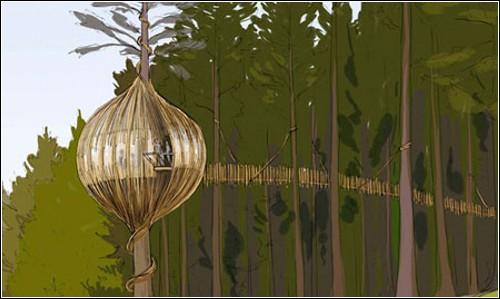Гнездо-ресторан на новозеландской сосне
