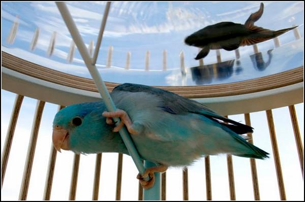 Проект Duplex. Невероятные встречи птички и рыбки