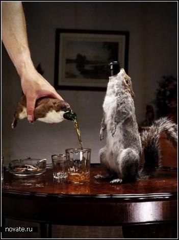Суровое шотландское пиво The End of History