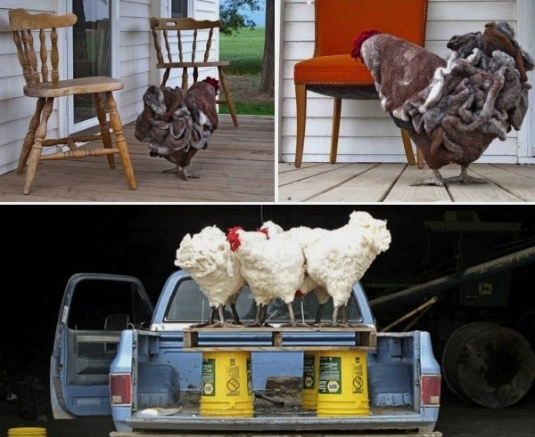 Chicken Footstool, скамеечка для ног из курятника
