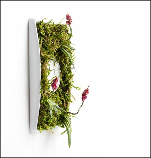 Озелененные розетки Growth Plate