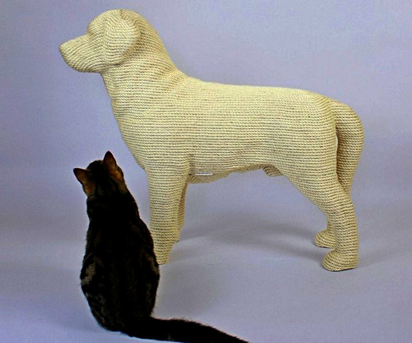 Коты в виде собак