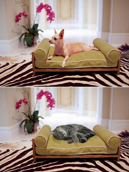 Гамаки для кошек и собак. Дизайн Кори Дрю (Corey Drew) для Pet Lounge Studios