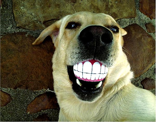 Прикольный мячик для улыбчивых собак. Smiling Dog Ball Toy от Porky Hefer
