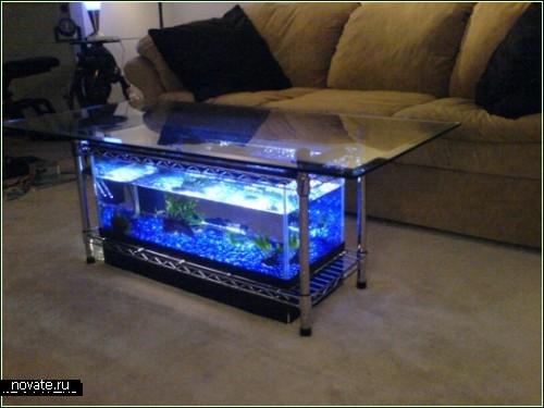 разноцветные аквариумные рыбки.