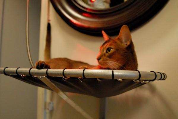 Как сделать гамак для кота фото