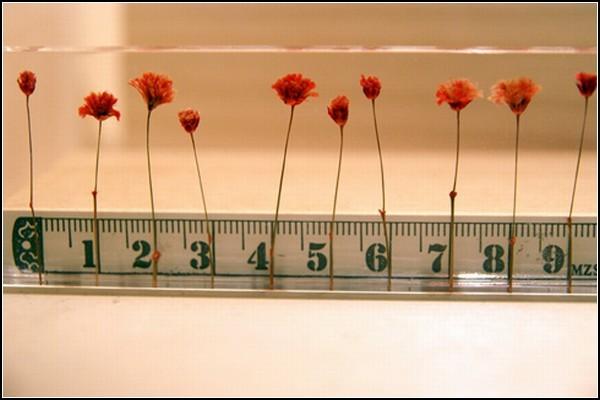 Линейка Flowers, способная измерить предметы в цветах
