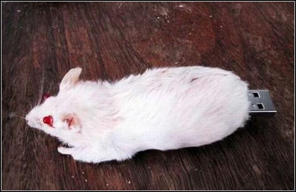 Флешка - мертвая мышка
