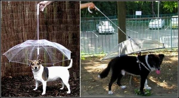 Зонт для домашнего животного