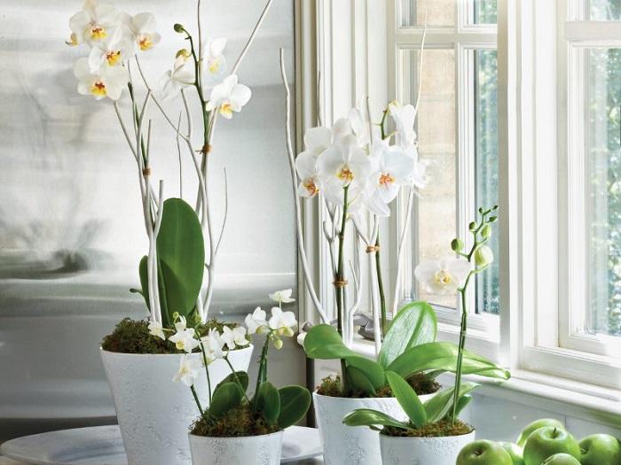Комнатные растения положительно влияют на ваше здоровье. / Фото: dizainvfoto.ru