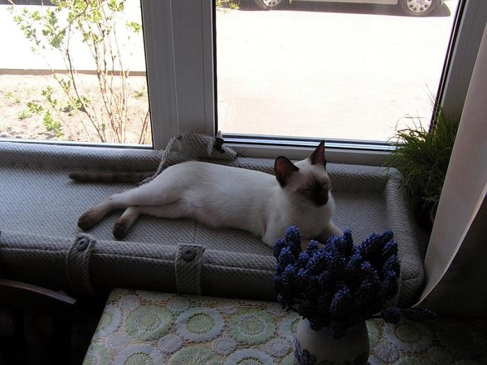 На подоконнике можно соорудить лежанку для кошки. / Фото: stroy-podskazka.ru