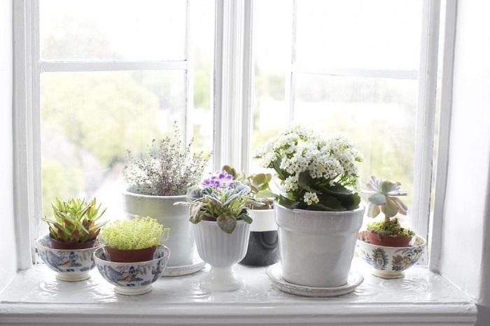 Цветы украсят ваш подоконник и квартиру в целом. / Фото: stroy-podskazka.ru
