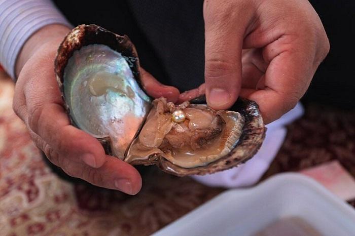 Жемчужины образовываются в раковинах моллюсков. / Фото: Zen.yandex.ru