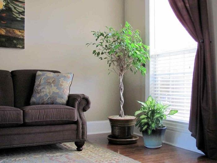 Большие растения могут стать хорошим акцентом. / Фото: dizain.guru