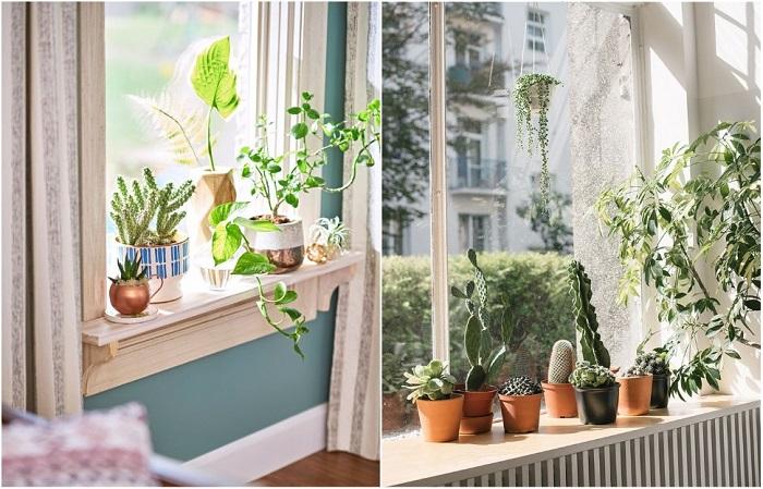 Живые цвета добавляют квартире уюта