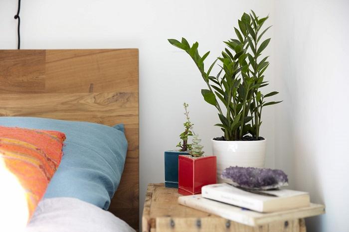 Комнатные растения гармонично впишутся в любой интерьер. / Фото: roomester.ru
