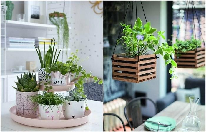 Комнатные растения помогут почувствовать спокойствие и умиротворение