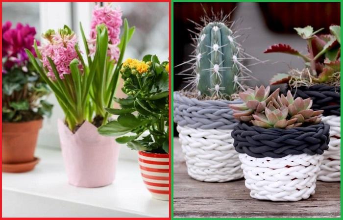 Вместо разнокалиберных цветочных горшков лучше выбирать оригинальные варианты
