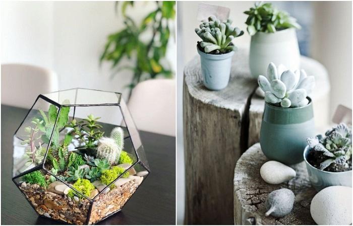 Флорариум и красивый суккулент удачно дополнят интерьер