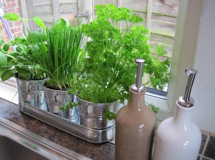 На подоконнике можно выращивать зелень. / Фото: Pinterest.ru