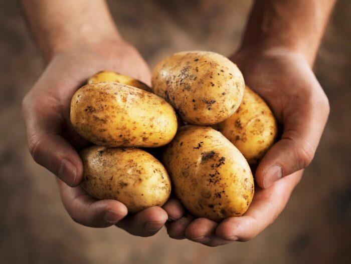Картофель один из самых высококалорийных овощей. / Фото: famt.ru