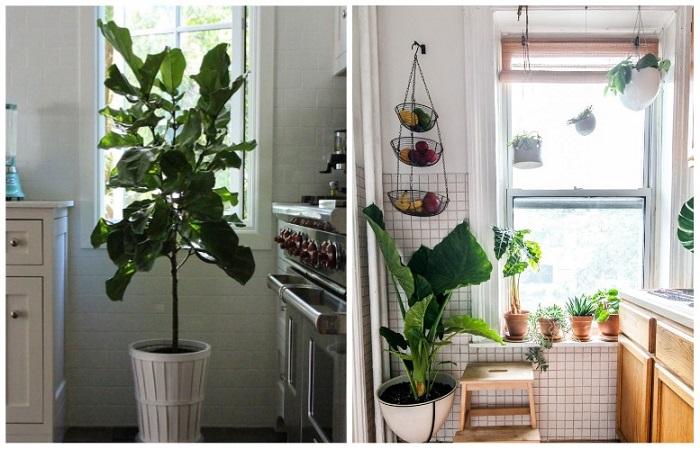 Комнатные растения улучшают микроклимат и очищают воздух
